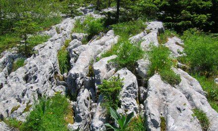 Au Rythme du Parc : Ressources en eau sur la Réserve des Hauts-Plateaux du Vercors