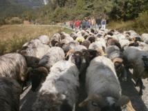 «Des Brebis En Marche», une transhumance du Lot à la Drôme…