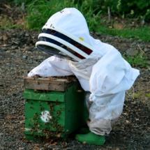 Une initiation sonore à l'apiculture