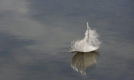 Exposition Plum'Art : de l'art, des plumes !