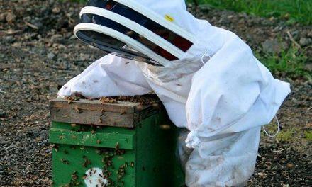 Initiez vous au monde fascinant des abeilles avec les Melli-Formations