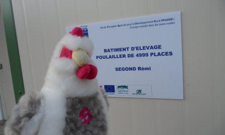 4999 poules pondeuses biologique à Barnave, Rémi s'installe…