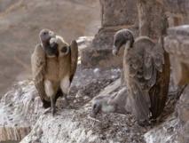 Les vautours par Nina et Sol