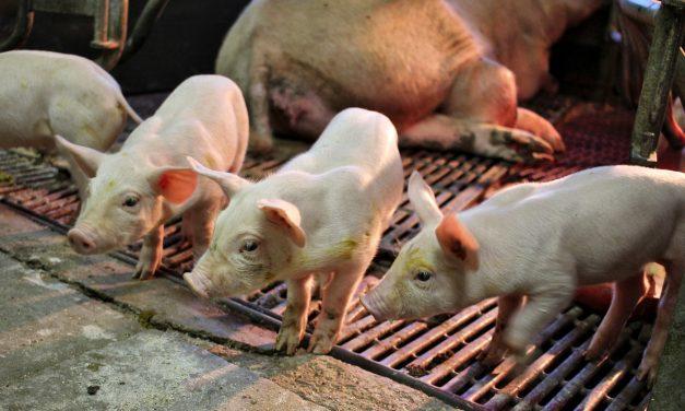Yves Bonnardel, Abolissons la viande !