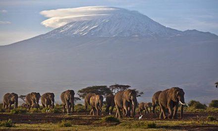 A LA RECHERCHE DU GROOVE PERDU (243) Volcans, orchestres sulfureux et groove explosif 2/4 Kilimandjaro