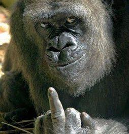 A LA RECHERCHE DU GROOVE PERDU (250) chansons de primate 1/2 Gare au gorille