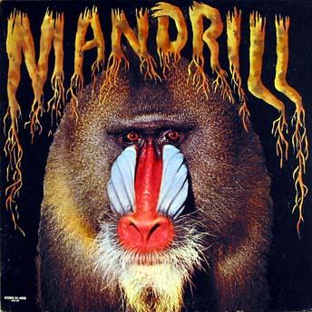 A LA RECHERCHE DU GROOVE PERDU (251) chansons de primate 2/2 funky monkey