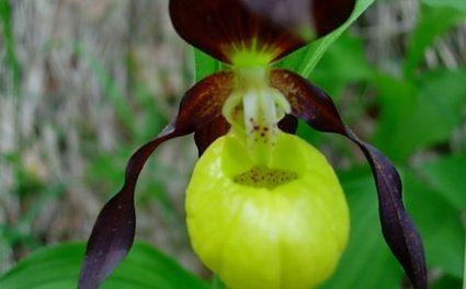 Ballade Botanique et Mycologique