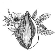 Trois rendez-vous avec le collectif La Vulva