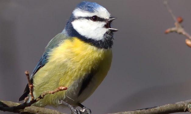 Expansion de voix #12 Festiwild : Jean et Johnny, chanteurs d'oiseaux en concert intégral !