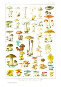 Exposition sur les champignons 20 et 21 octobre 2012