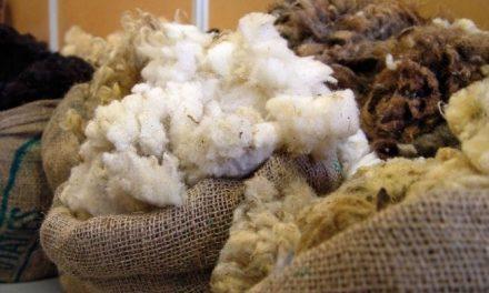 Biotop [153] : Une filière laine locale, utopie ou réalité ? (1)