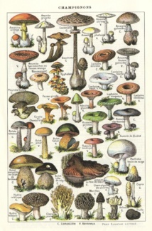 Des questions sur les champignons?