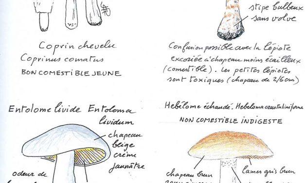 AG du REDAR et actualités par Jean-Claude Rouchouse