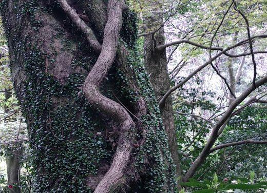 Expansion De Voix #18 Festiwild : Rencontre avec Francis Hallé, des Forêts pour Notre Planète