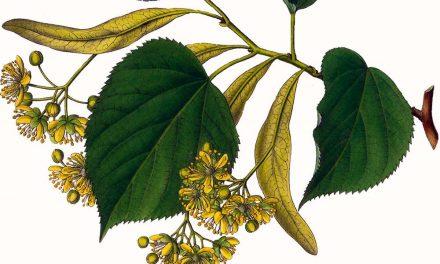 L'Herbier du Diois