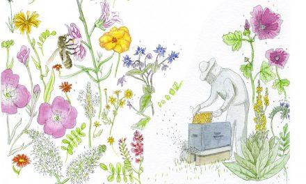 Tout sur le miel au jardin bleu